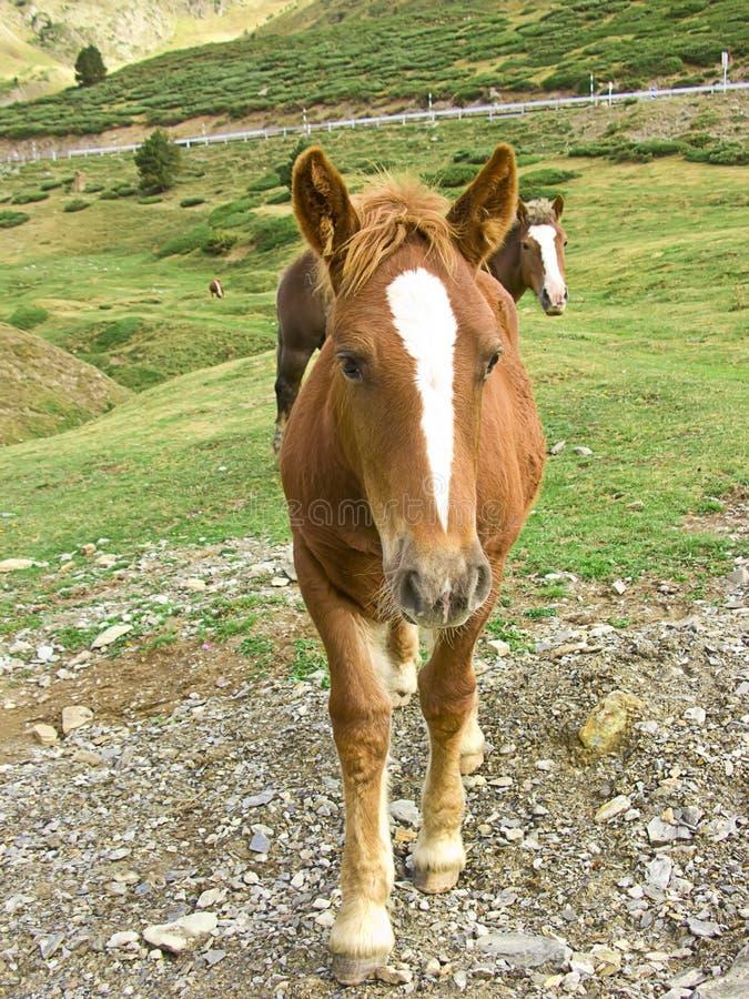 brun häststående royaltyfri fotografi