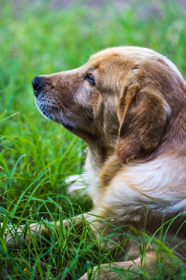 Brun hund i gardem arkivfoto