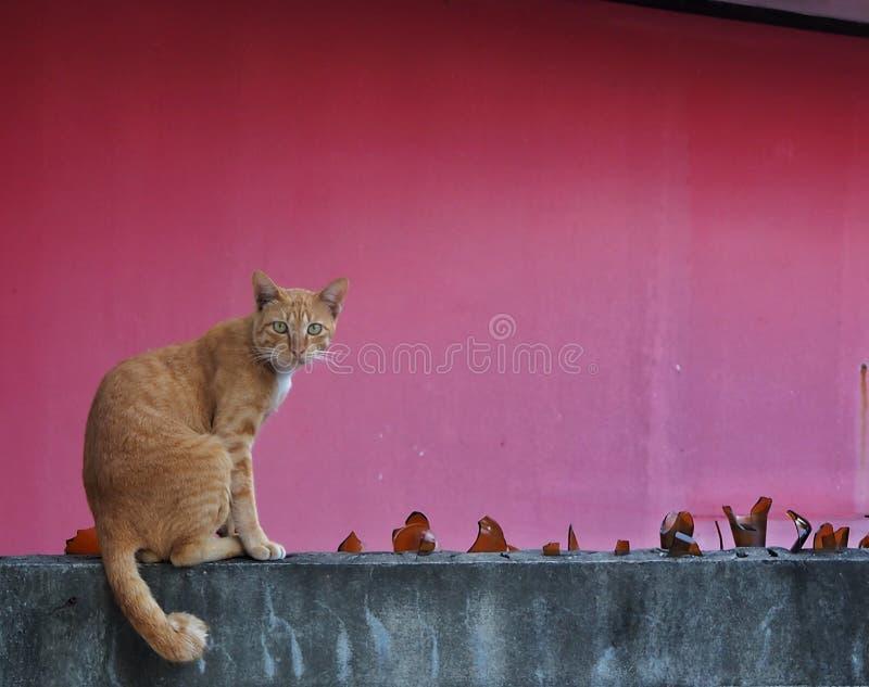 Brun katt som sitter på väggen och den röda bakgrunden Det ser något fotografering för bildbyråer