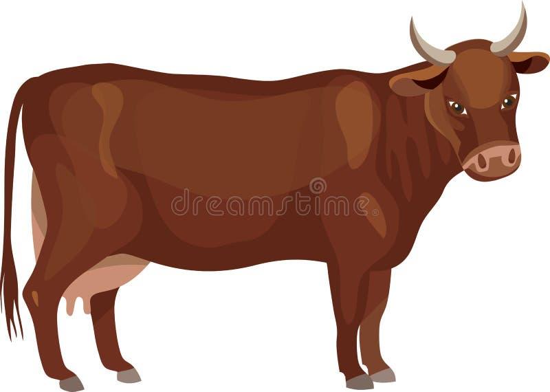 brun ko stock illustrationer
