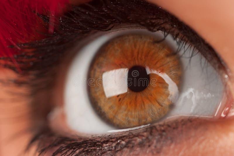 brun kvinna för closeupöga s arkivbild