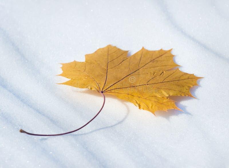 Brun leaf i den November avverkningen royaltyfria bilder