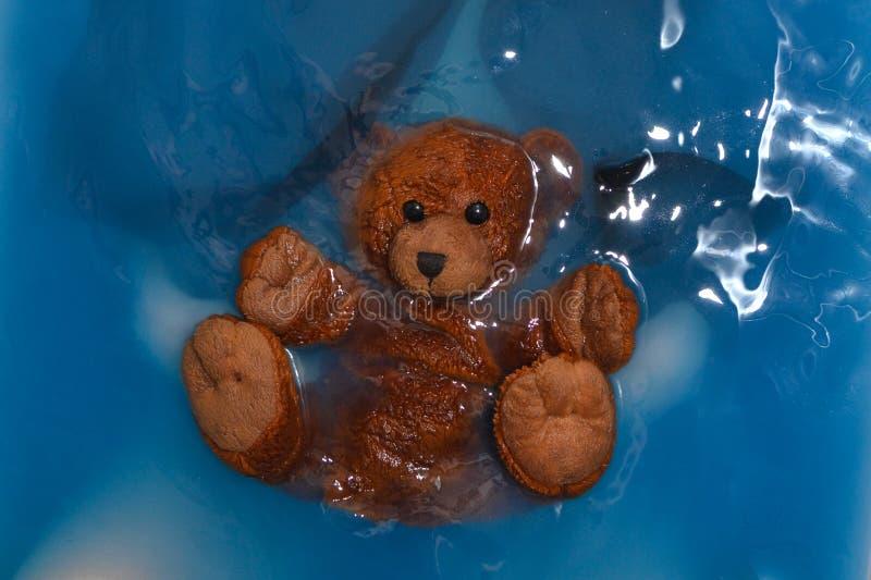 Brun liten våt björn i blått vatten arkivbild