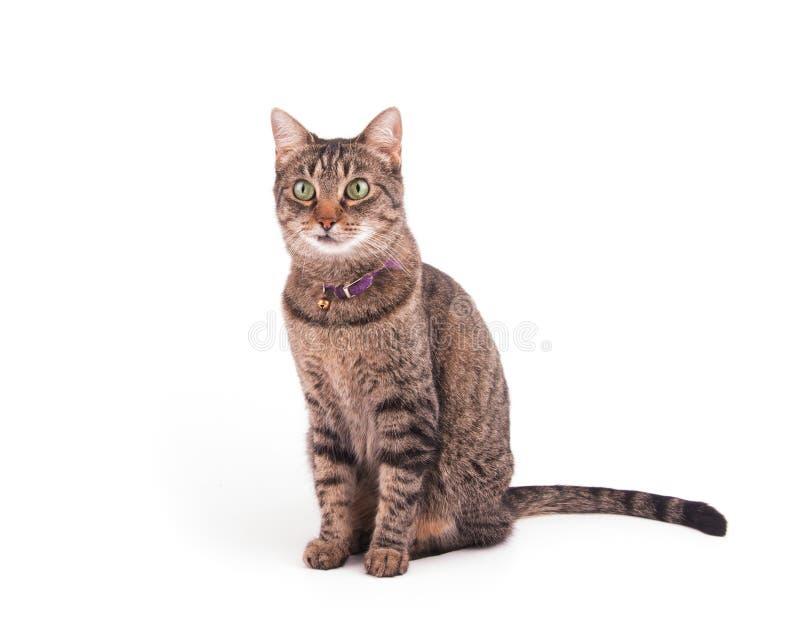 Brun strimmig kattkatt som sitter och ser till det vänstert arkivbild