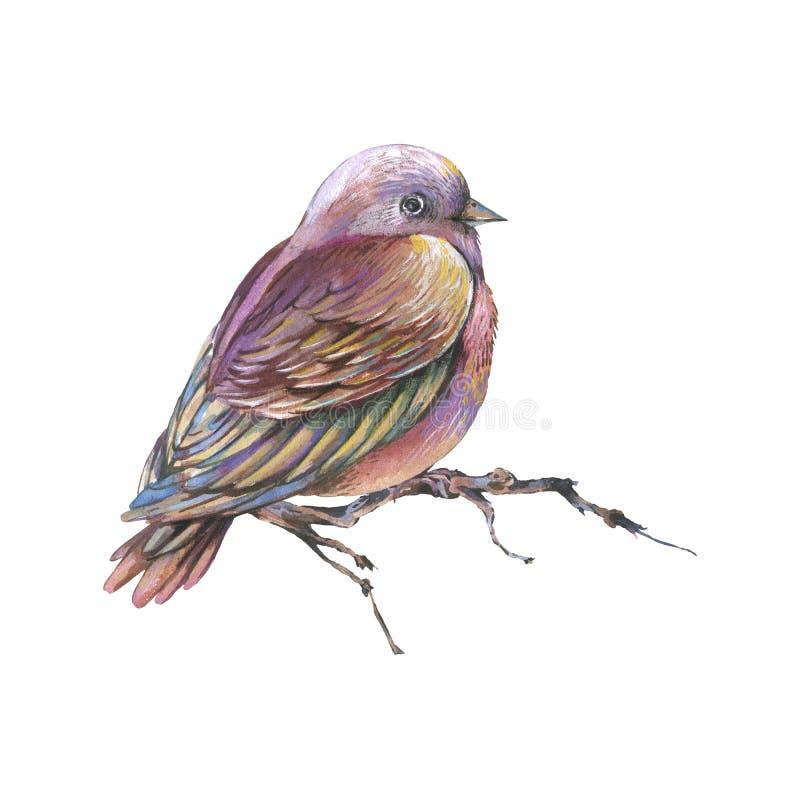 Brun vattenfärgfågel på en filial som isoleras på vit bakgrund, naturlig illustration stock illustrationer