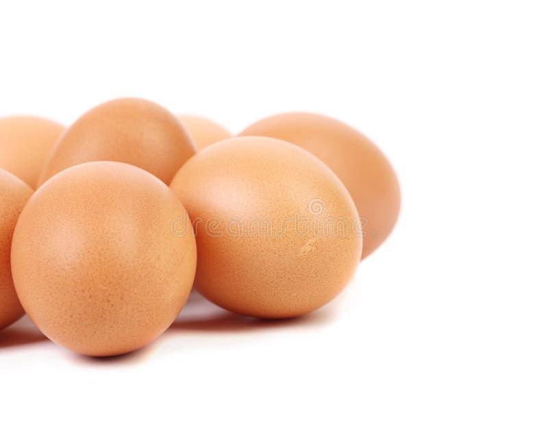 Bruna ägg arkivfoton