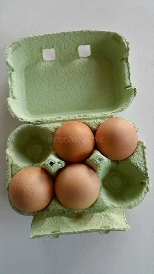 bruna ägg fyra fotografering för bildbyråer