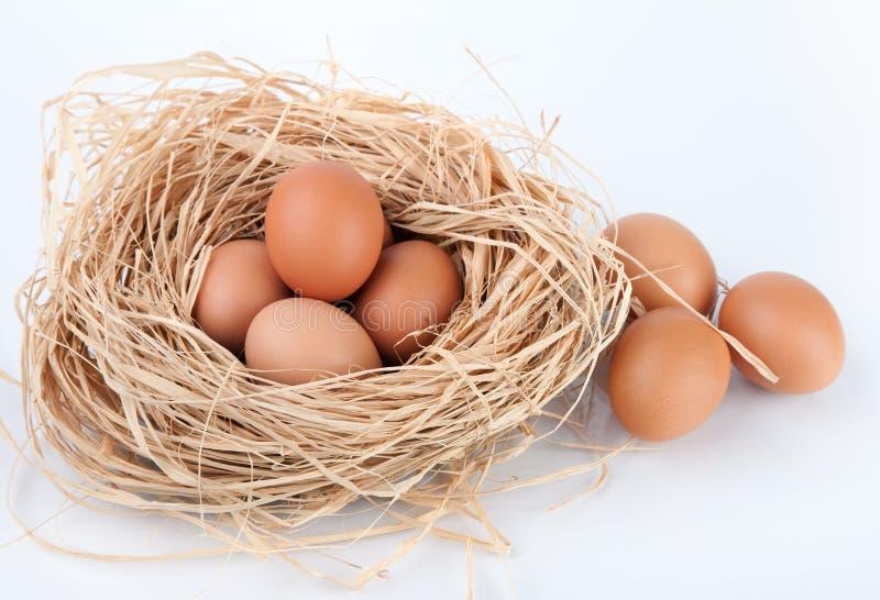 Bruna ägg på hö bygga bo i feg lantgård royaltyfria foton