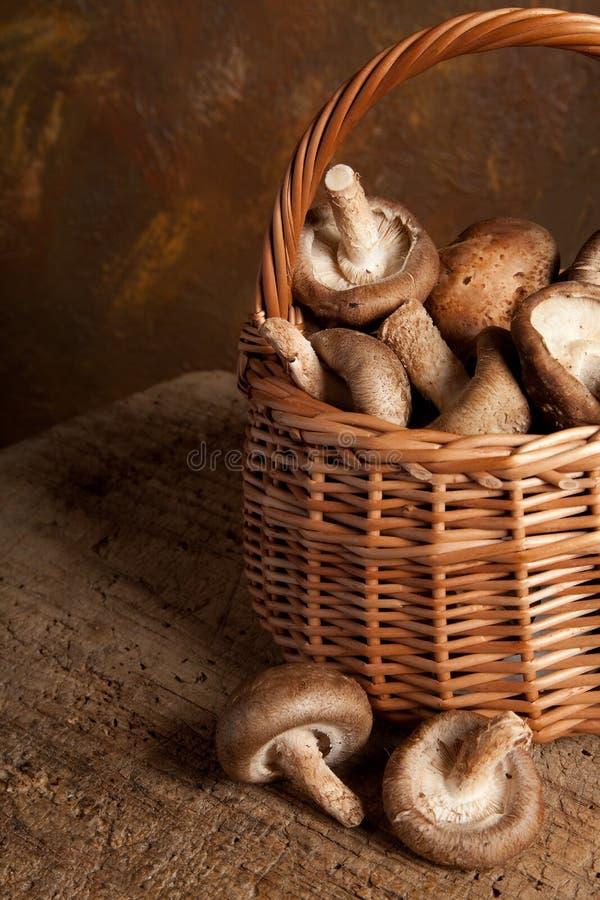 bruna champinjoner arkivfoton