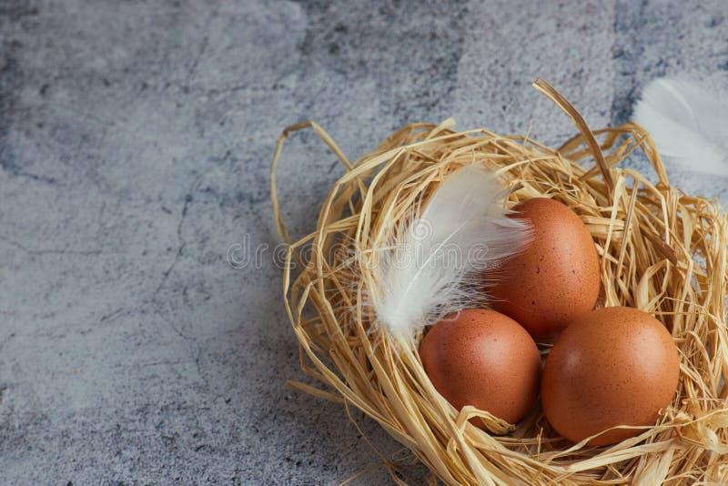 Bruna fega ägg med vita fjädrar i hörede på ljus betong closeup av en lantgård av ägg kopiera avstånd Horisontalsikt av royaltyfria foton