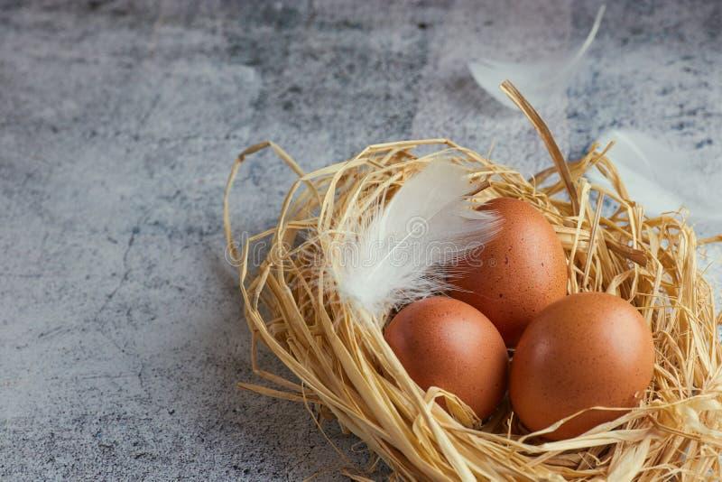 Bruna fega ägg med vita fjädrar i hörede på ljus betong closeup av lantgårdägg horisontalsikt av rå fega ägg royaltyfri fotografi