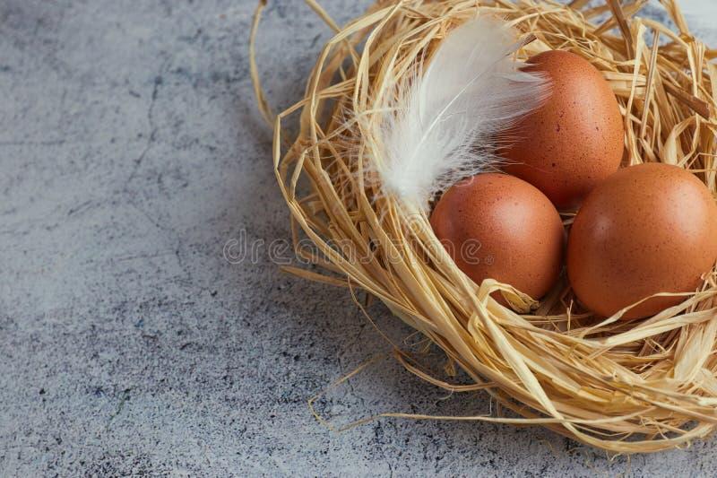 Bruna fega ägg med vita fjädrar i hörede på ljus betong closeup av lantgårdägg horisontalsikt av rå fega ägg royaltyfri bild