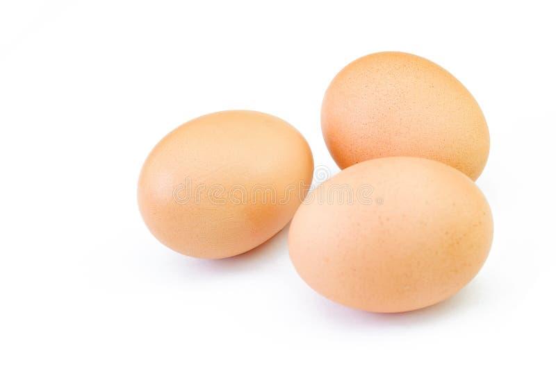Bruna fega ägg som isoleras på vit bakgrund royaltyfri bild