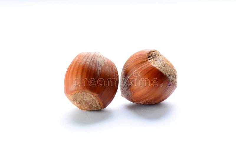 Bruna hasselnötter för helhet arkivfoton