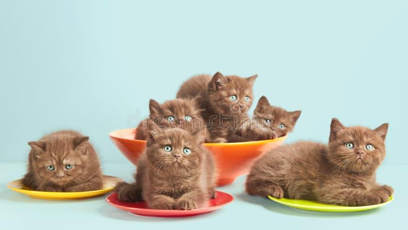 Bruna kattungar på färgrika plattor royaltyfria foton