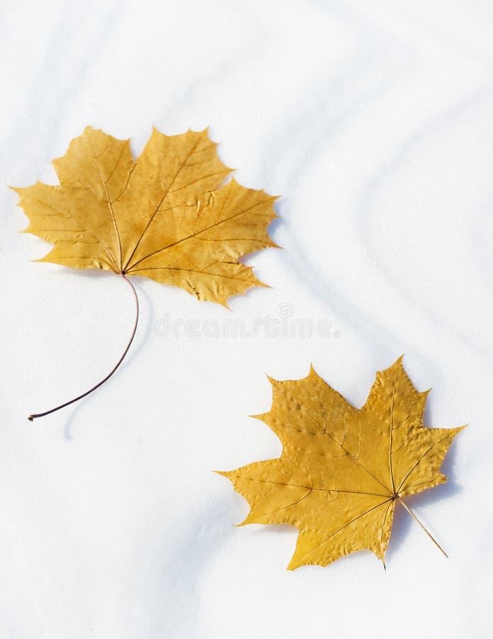 Bruna leafs arkivbilder