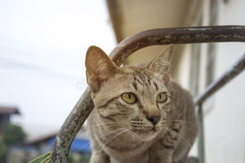 Bruna randiga katter spelar i olika gester arkivbild
