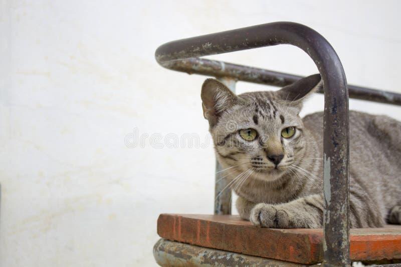 Bruna randiga katter spelar i olika gester royaltyfria bilder