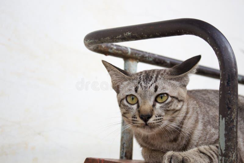 Bruna randiga katter spelar i olika gester arkivfoto