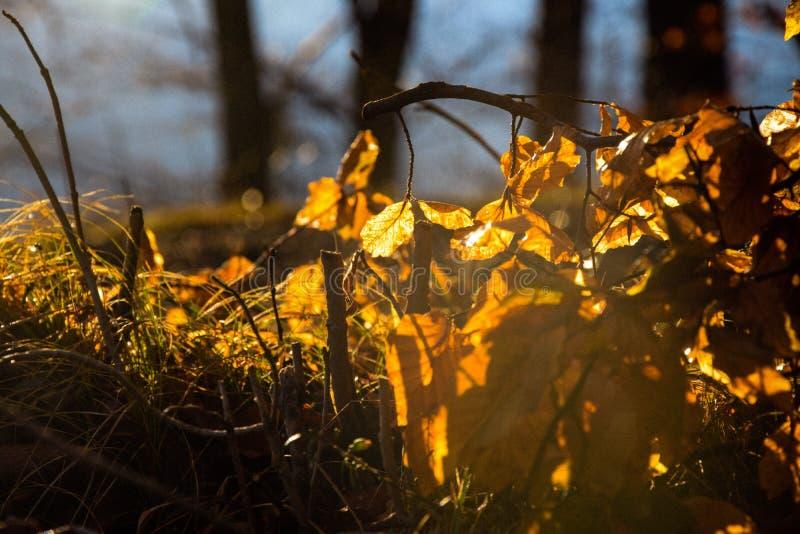 Bruna sidor av ett träd arkivfoto