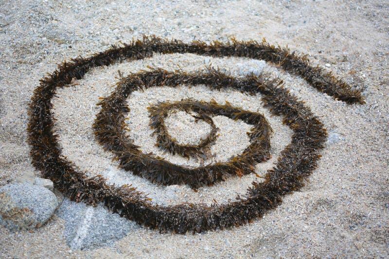 Brunalgspiral på grov sand royaltyfria foton
