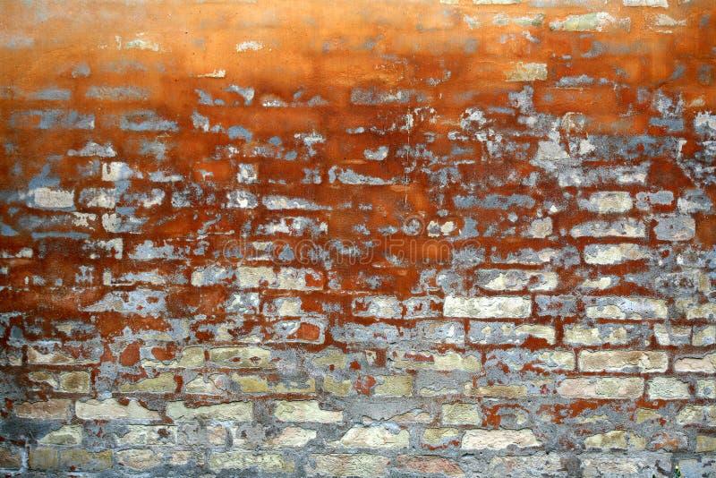 Brunatnożóły colour dom obraz stock