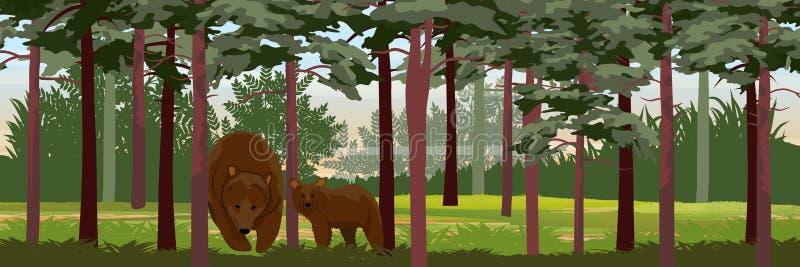 Brunbjörn och hennes gröngöling i barrträds- pinjeskog stock illustrationer