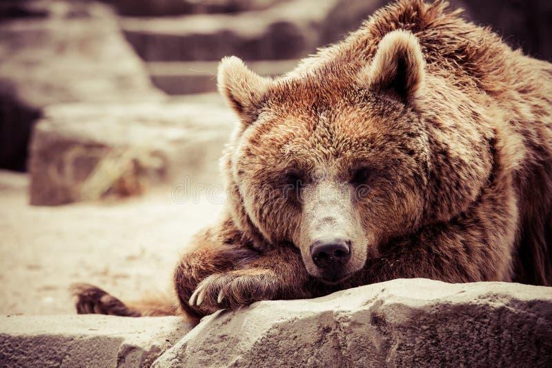 Download Brunbjörnen I Ett Roligt Poserar Arkivfoto - Bild av furry, grizzly: 37346518