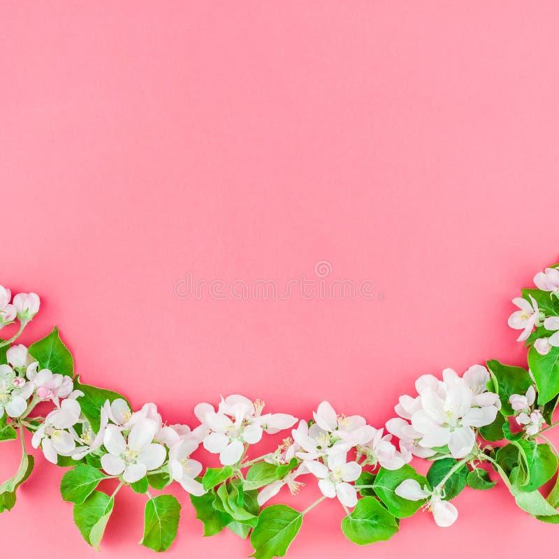 Brunch de floraison blanc de pommier de ressort images libres de droits