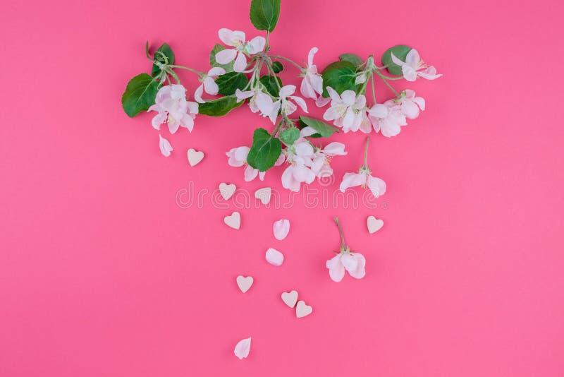 Brunch de floraison blanc de pommier de ressort image stock