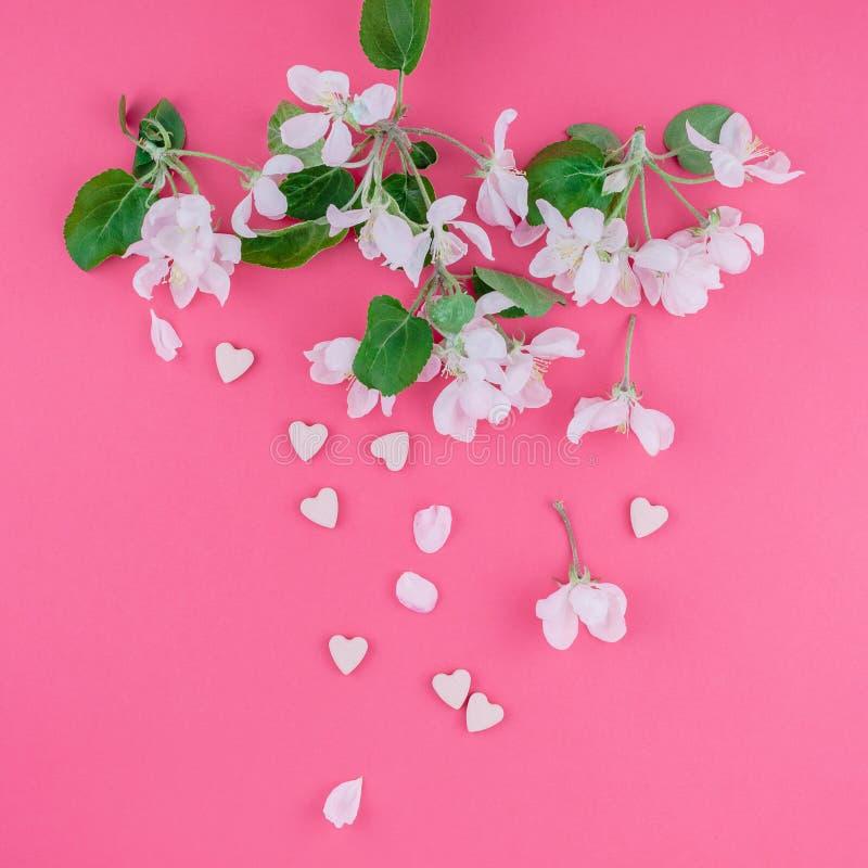 Brunch de floraison blanc de pommier de ressort image libre de droits
