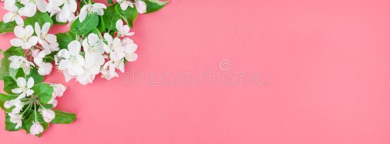 Brunch de floraison blanc de pommier de ressort images stock