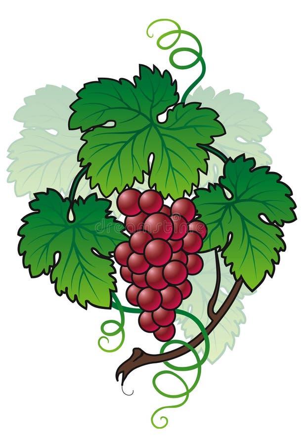 Brunch de raisin illustration de vecteur