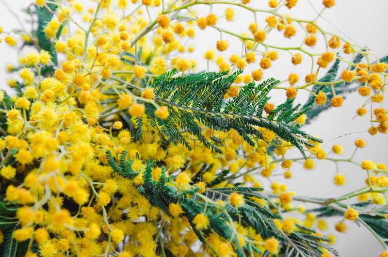 Brunch di bella mimosa gialla Fondo della primavera, fiori rustici Natura morta, pasqua fotografia stock