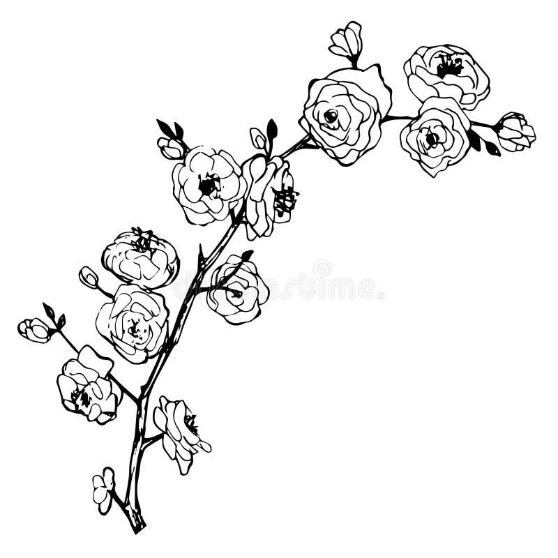 Brunch dibujado mano con las flores stock de ilustración