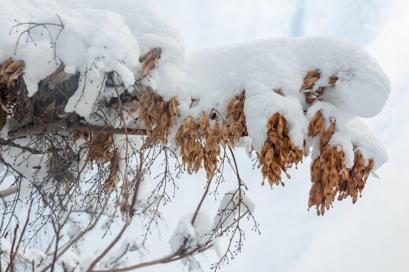 Brunch im Schnee lizenzfreies stockbild