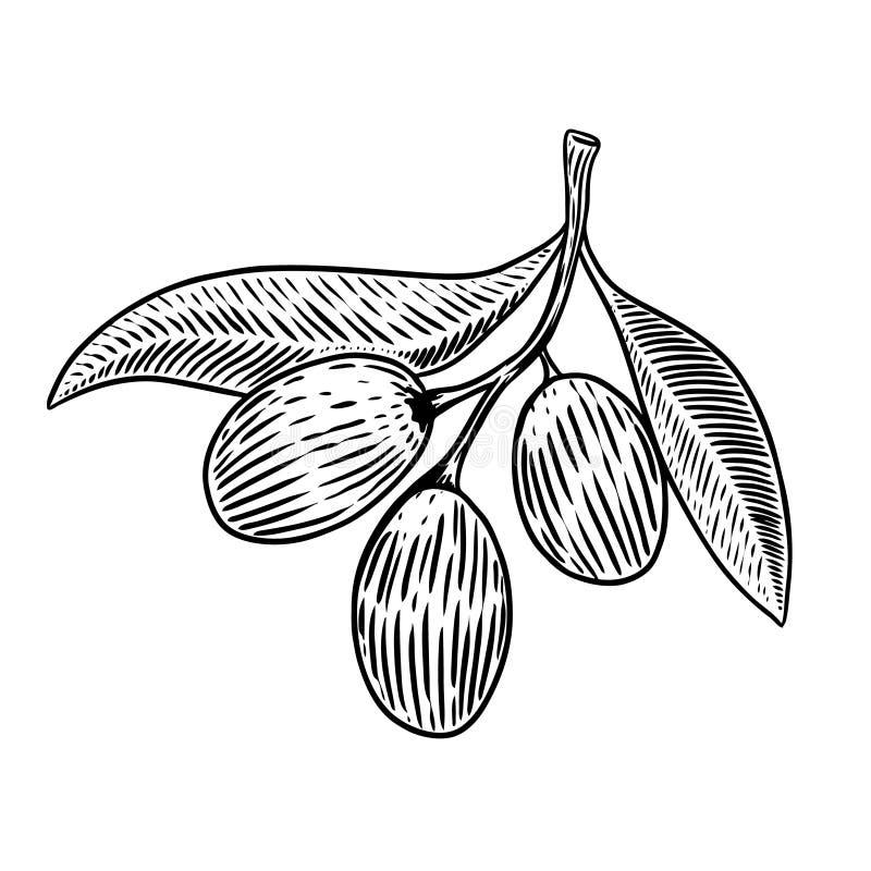 Brunch verde oliva en estilo del grabado stock de ilustración