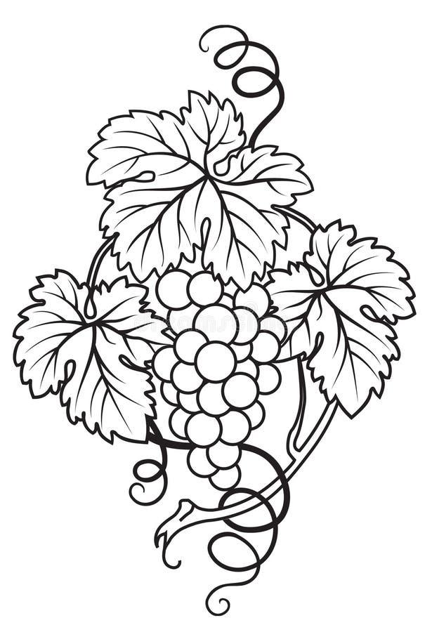 brunch winogron ilustracji