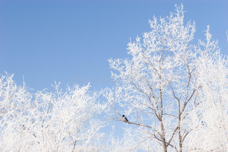 Brunchs oder die Bäume abgedeckt mit Schnee und einem Blau lizenzfreies stockfoto