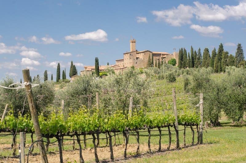 Brunello di Montalcino vineyards royalty free stock photo
