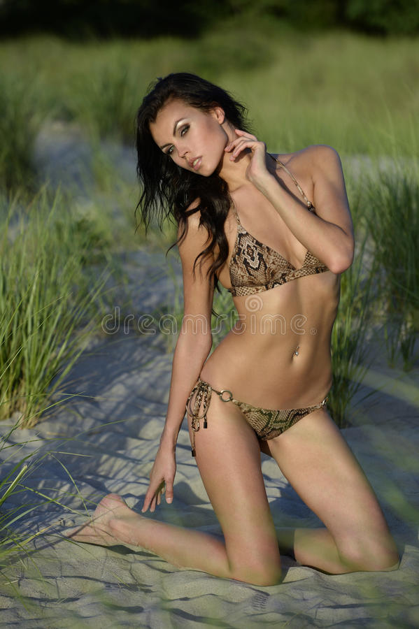 Brunetki mody model pozuje w zwierzęcym druku bikini na zmierzchu czasie zdjęcia royalty free