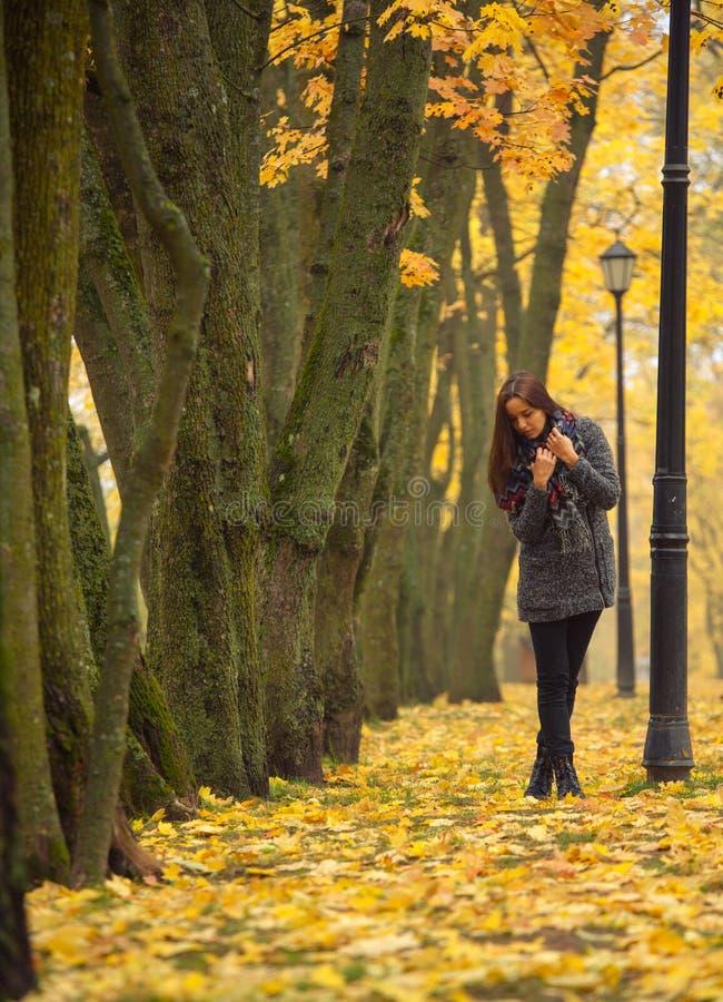 Brunette, der gegen den Hintergrund von Herbstbäumen aufwirft Einsame Frau, die Naturlandschaft im Herbst genießt stockfotos