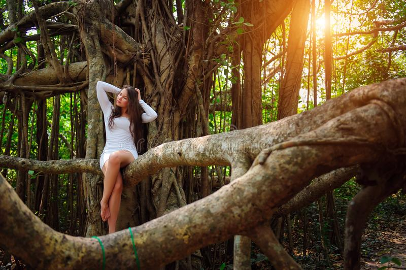 Brunette with long hair sits on a tree with curly hanging branches. Young attractive girl in a short white dress sits on Banyan stock photos