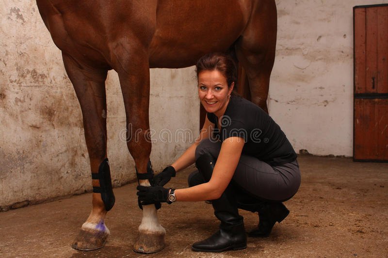 Brunette woman putting tendon boots on horse legs. Brunette woman putting tendon boots on brown horse legs stock photo