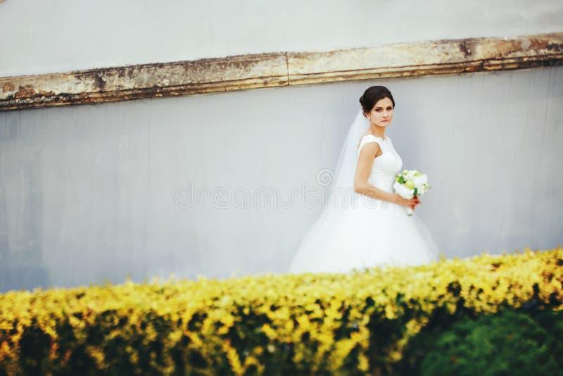 Brunettebraut geht entlang eine weiße Wand hinter gelbe Büsche stockfotografie