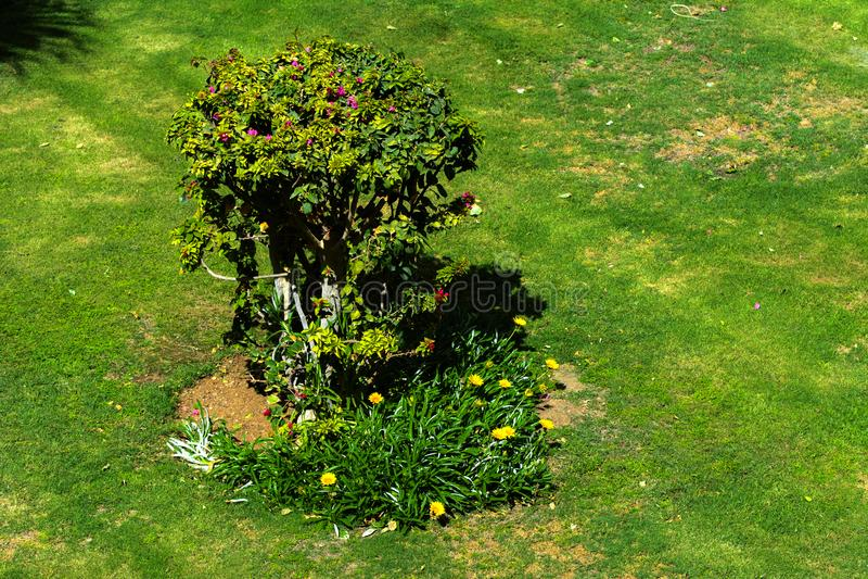 Brunn-ansad buske av en beautifully kantjusterad vintergrön buske ask-tr arkivbilder