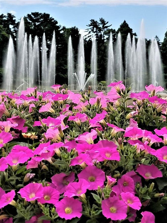 Brunnen und Blumen lizenzfreies stockbild