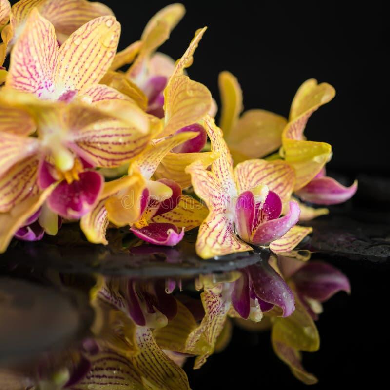 brunnsortstilleben av zenstenar och att blomma fattar av avriven orange orkidé royaltyfria foton