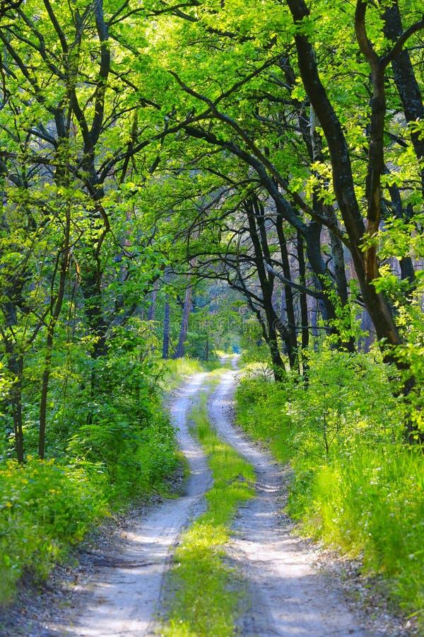 Brunstväg i grön skog arkivfoton