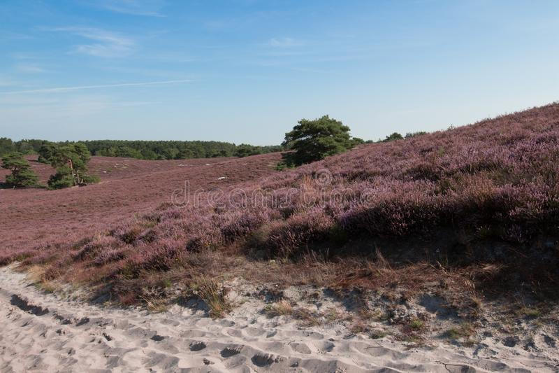 The Brunsummerheide a national park in the Limburg the Netherlands. Ideal place for an active lifestyle royalty free stock photos